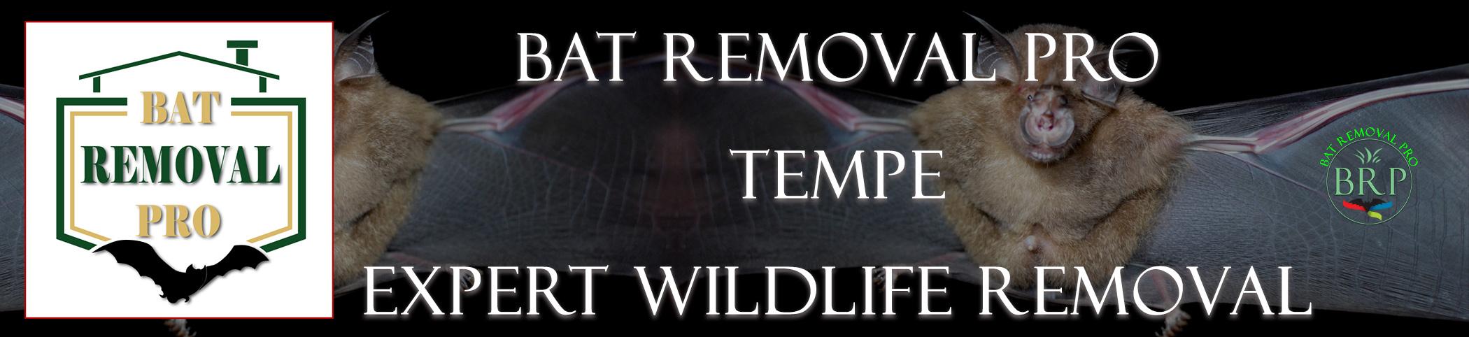 tempe_arizona_HEADER_IMAGE bat removal pro
