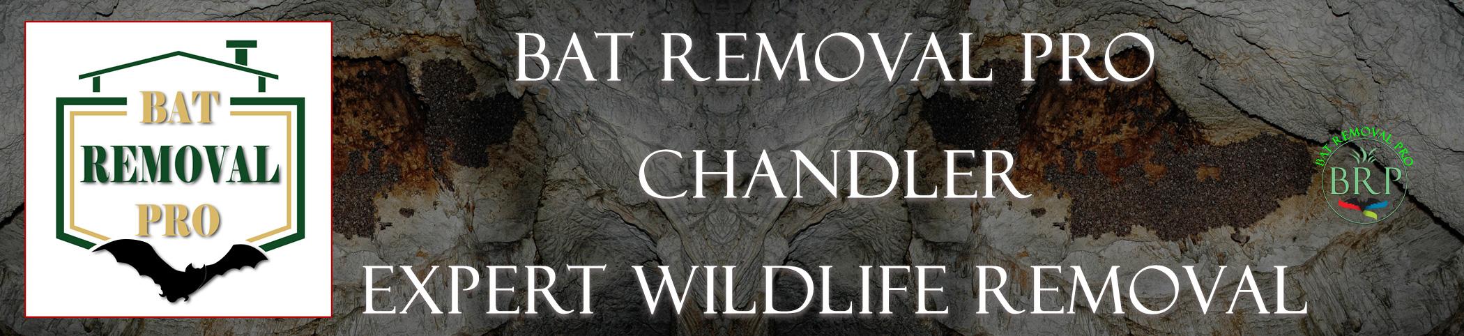 chandler_arizona_HEADER_IMAGE bat removal pro