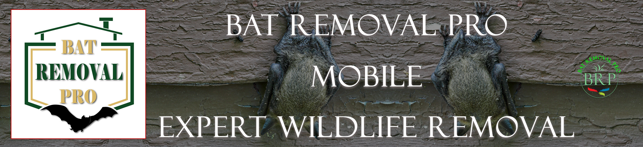 mobile_alabama_HEADER_IMAGE bat removal pro