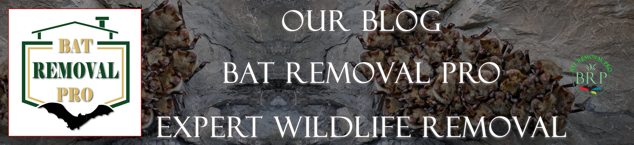 Bat Removal Pro Blog - Number 1 Professionals on Bat Knowledge and Removal