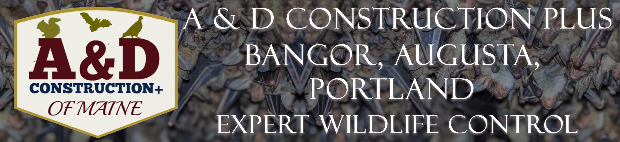 bangor augusta portland maine header image at header image at bat removal pro