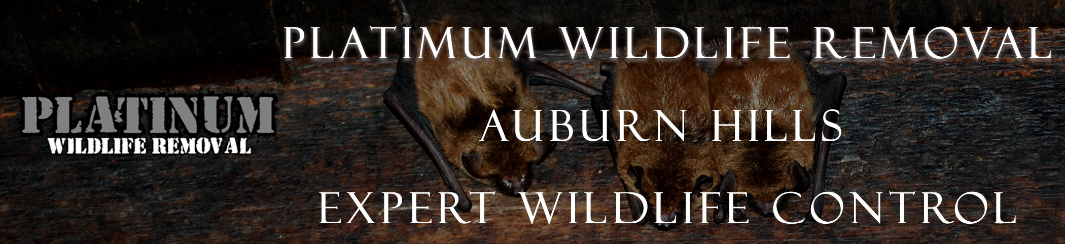 auburn_hills_michigan header image at bat removal pro