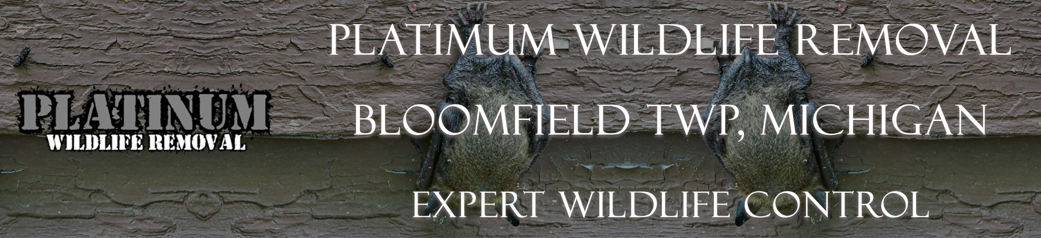 Bloomfield-TWP-Platinum-Wildlife-Removal_michgan