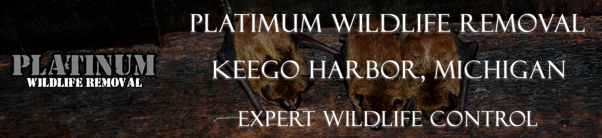Keego-Harbor-Platinum-Wildlife-Removal-michgan