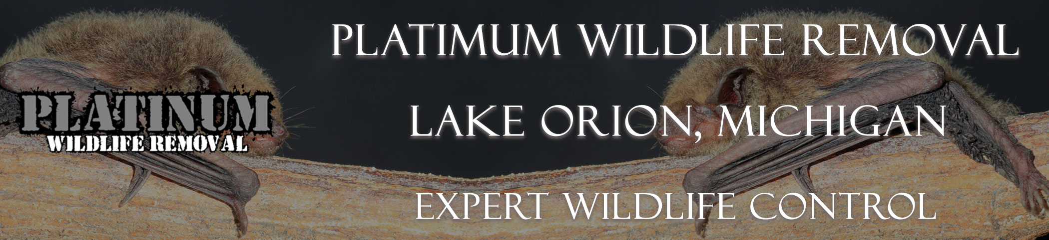 Lake-Orion-Platinum-Wildlife-Removal-michgan