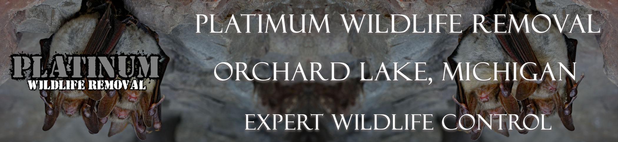 Orchard-Lake-Platinum-Wildlife-Removal-michgan