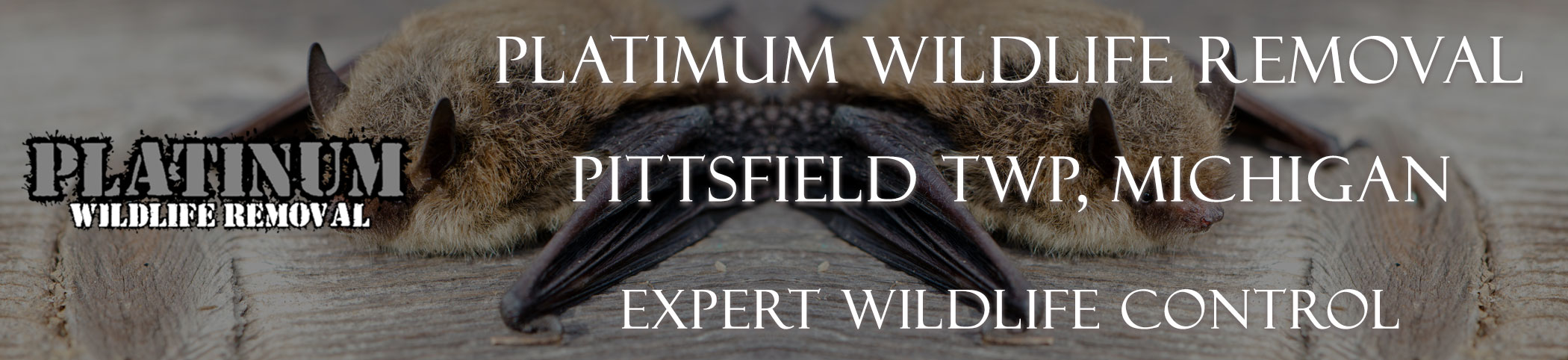 Pittsfield TWP _mich header image at bat removal pro