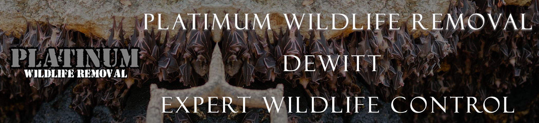 Dewitt mich header image at bat removal pro