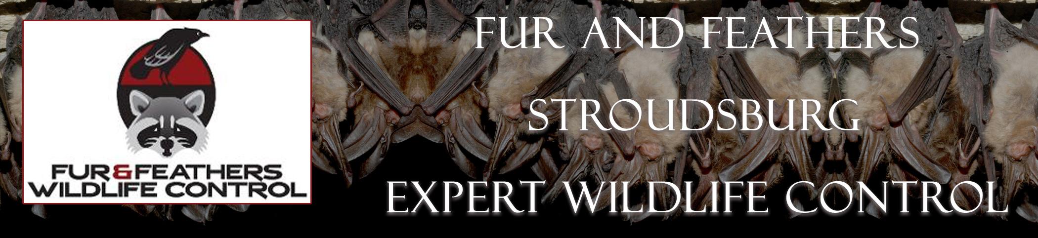 bat exclusion u0026 control company in stroudsburg pa bat removal pro