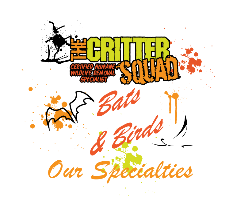 Bats and birds are our specialty at the Critter Squad