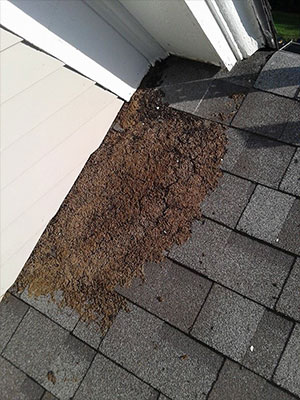 creature removal guano-on-roof-shingles smaller file