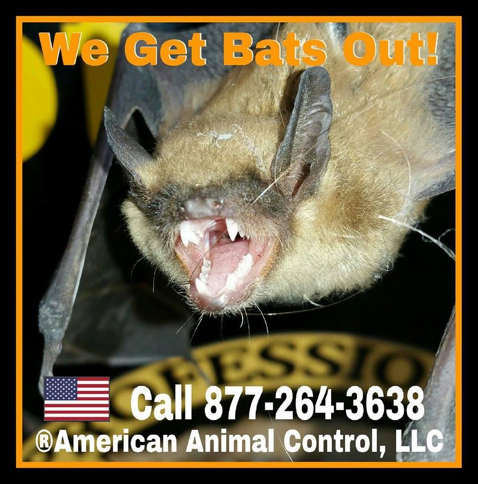 Valparaiso, Indiana Bat Control Services