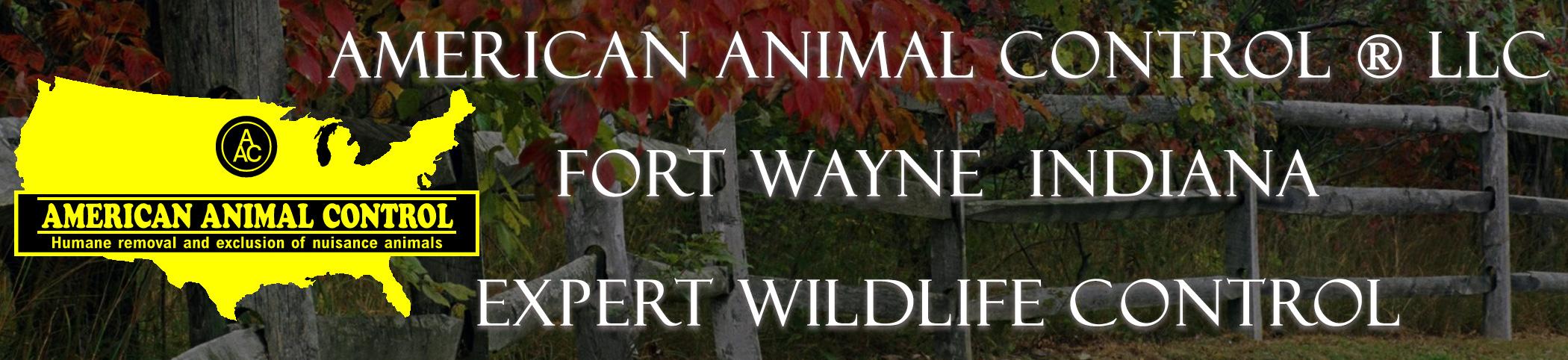 Fort Wayne Wildlife Control