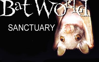 Bat World: The Only Bat Sanctuary In The World!