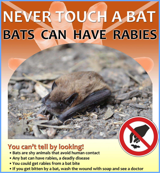 Never Touch A Bat