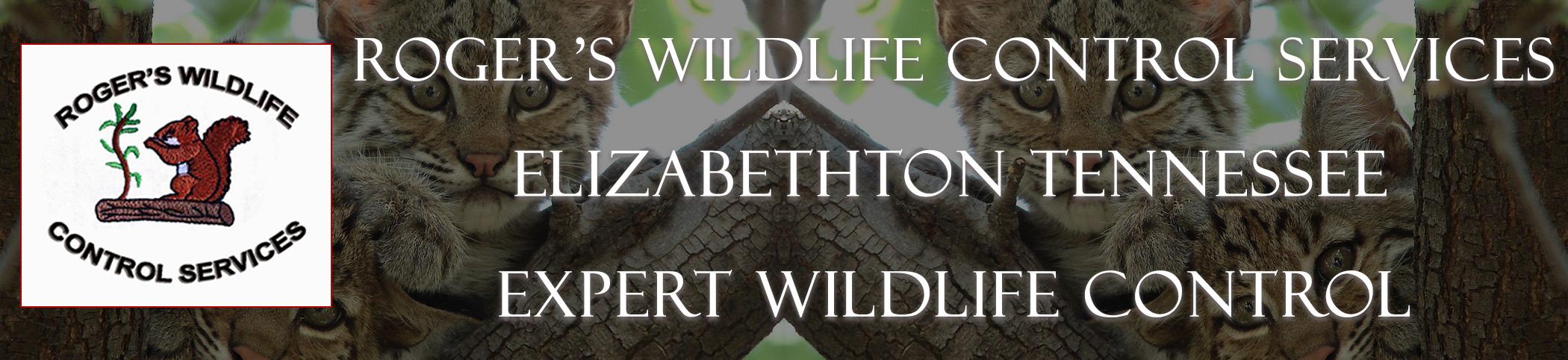 rogers_wildlife_Elizabethton_TN_headers