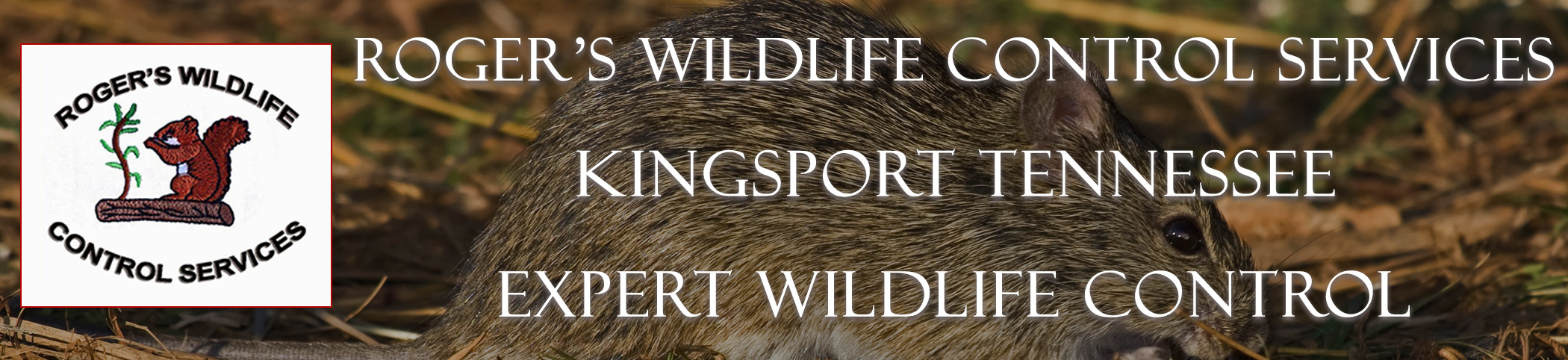 rogers_wildlife_Kingsport,_TN_headers