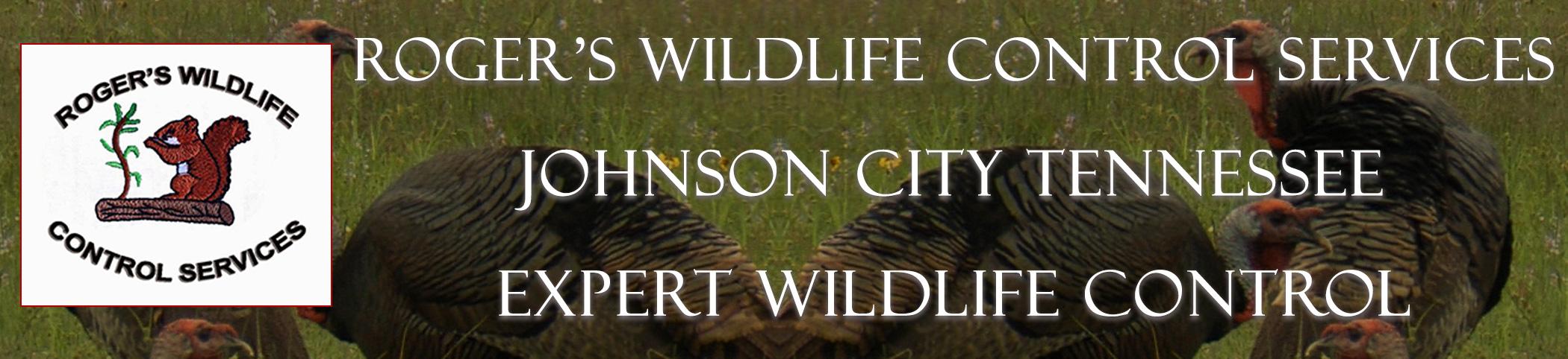 rogers_wildlife_johnson_city_TN_headers