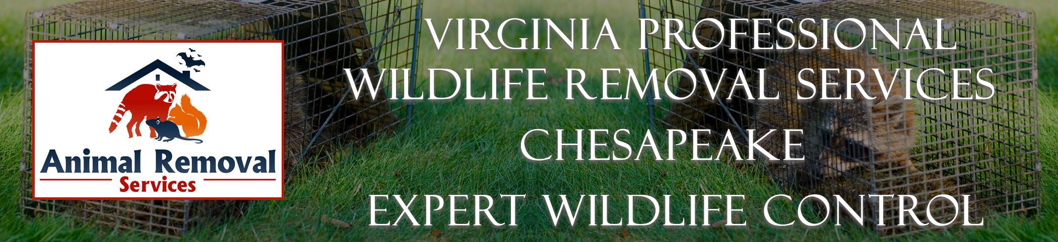 Virginia-Professional-Wildlife-Removal-Services-Chesapeake