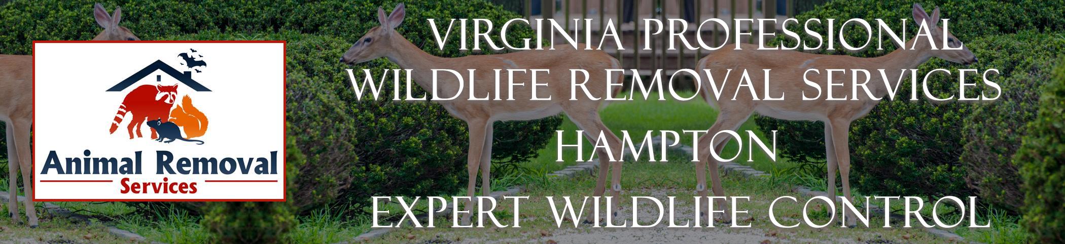 Virginia-Professional-Wildlife-Removal-Services-Hampton