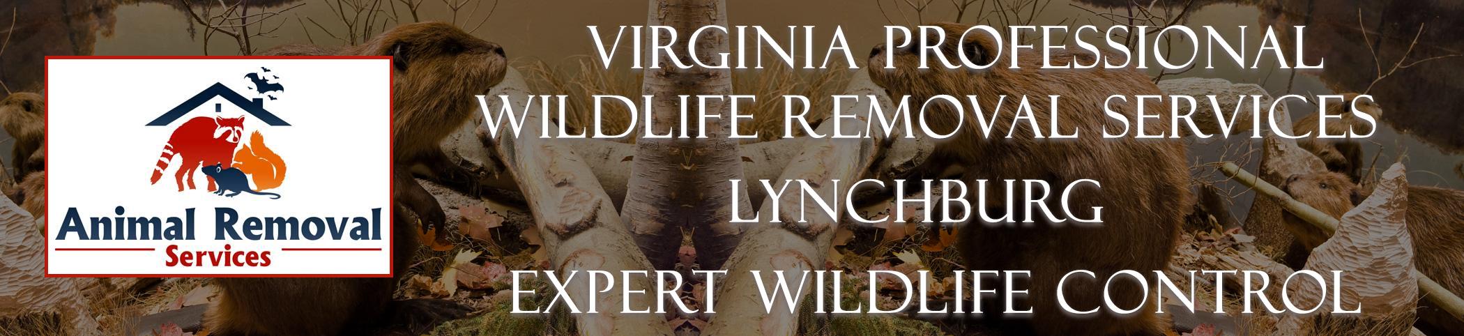 Virginia-Professional-Wildlife-Removal-Services-Lynchburg