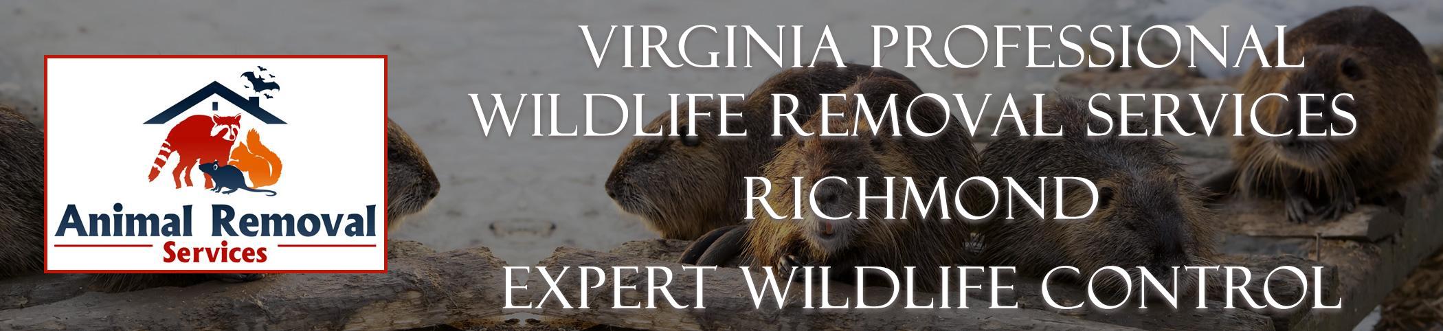 Virginia-Professional-Wildlife-Removal-Services-Richmond