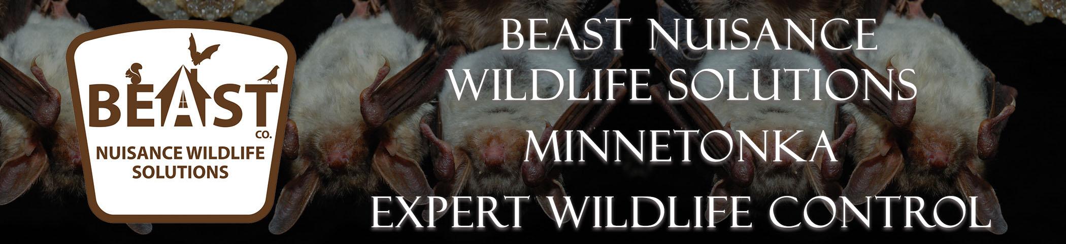 beast_headers_Minnetonka