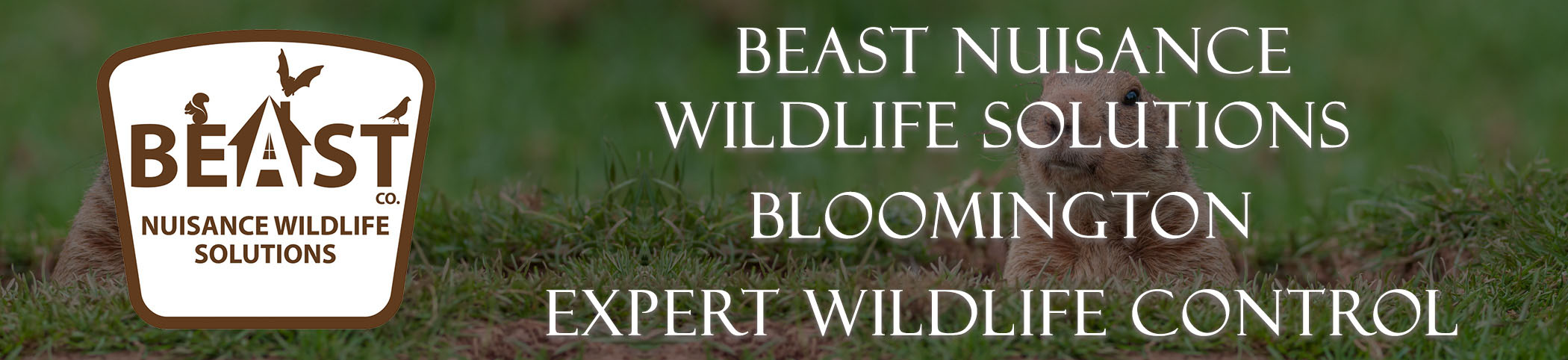 beast_headers_bloomington
