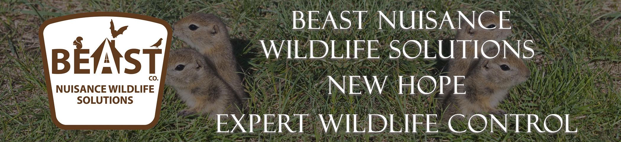 beast_headers_new_hope