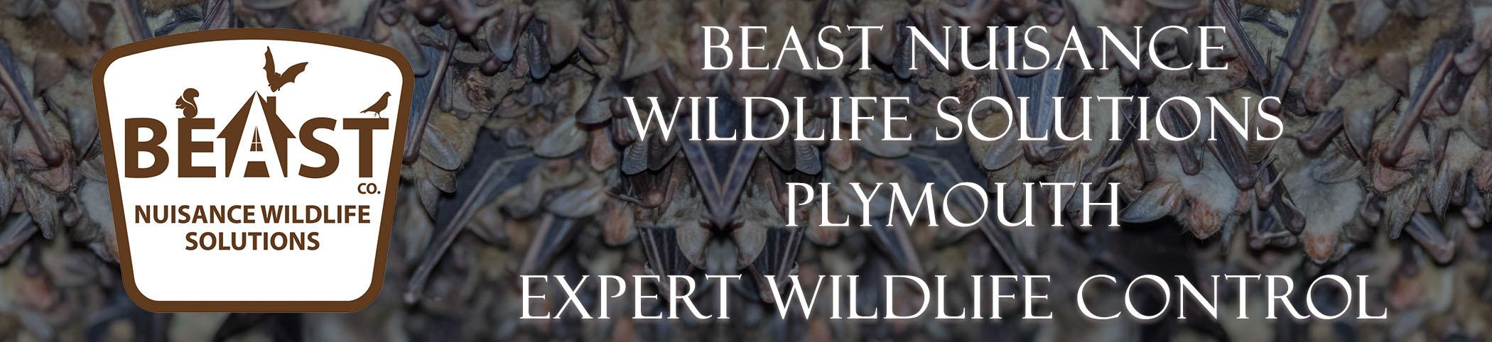 beast_headers_plymouth