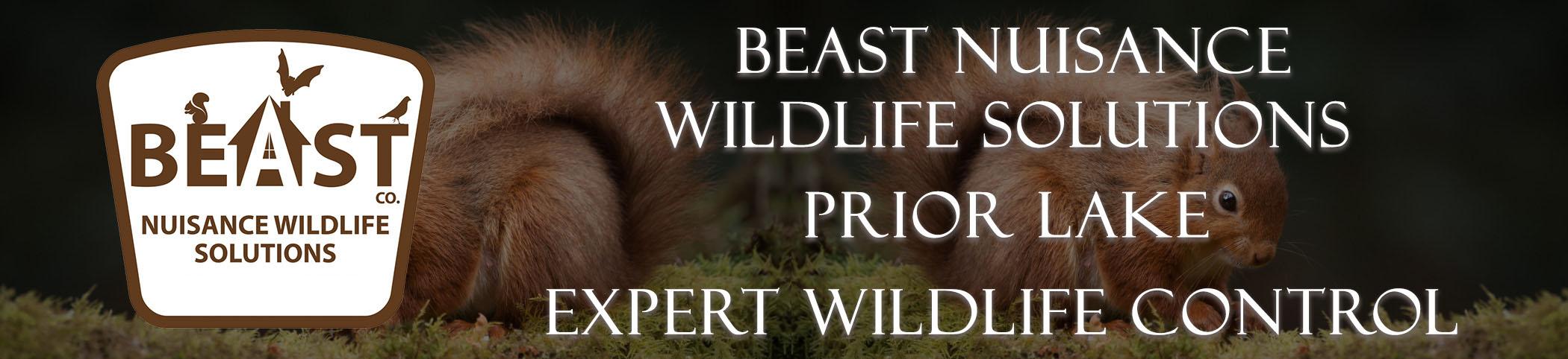 beast_headers_prior_lake