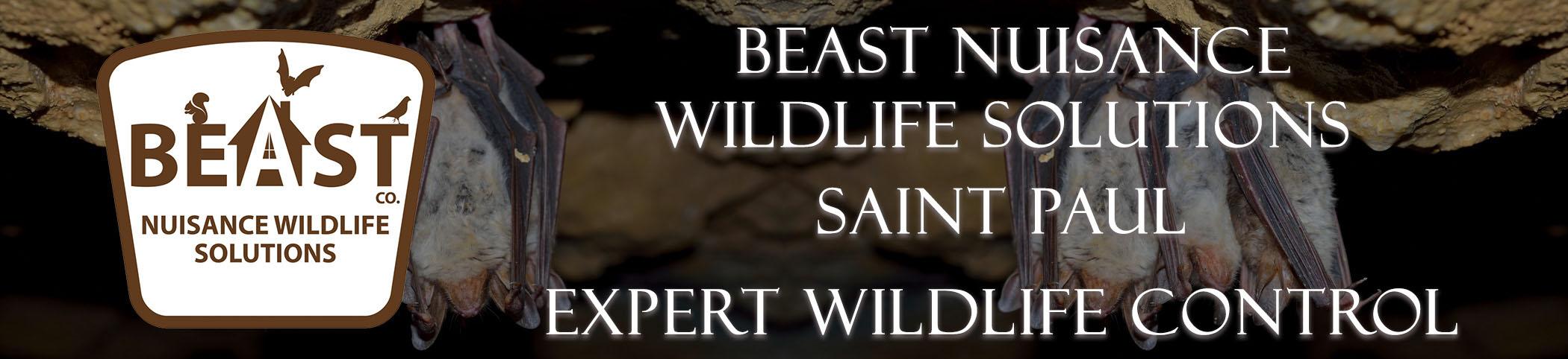 beast_headers_saint_paul