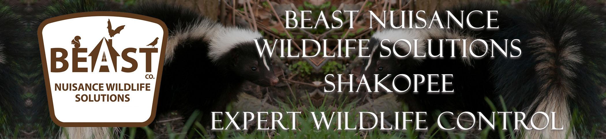 beast_headers_shakopee