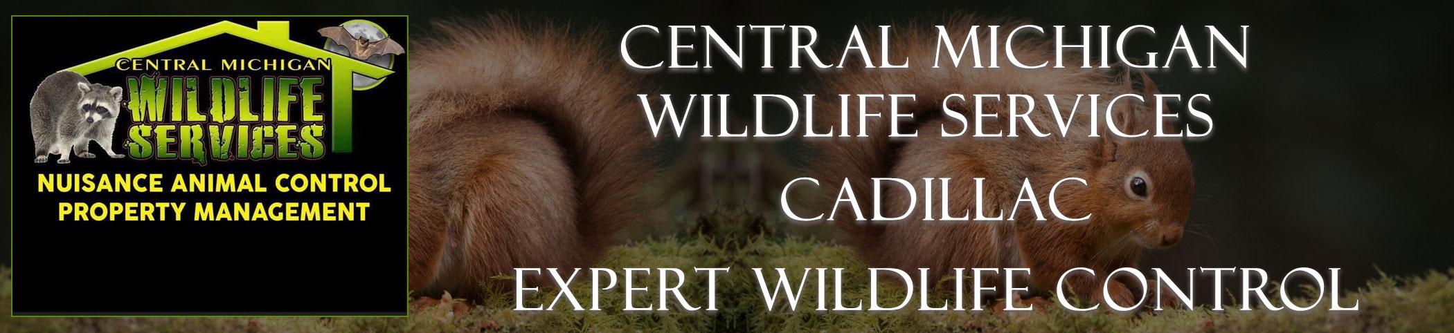 central_michigan_Cadillac_headers