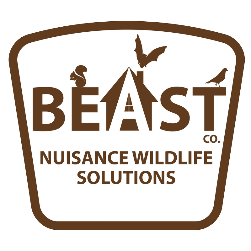 Saint Paul Minnesota Bat Removal beast nuisance wildlife solutions logo