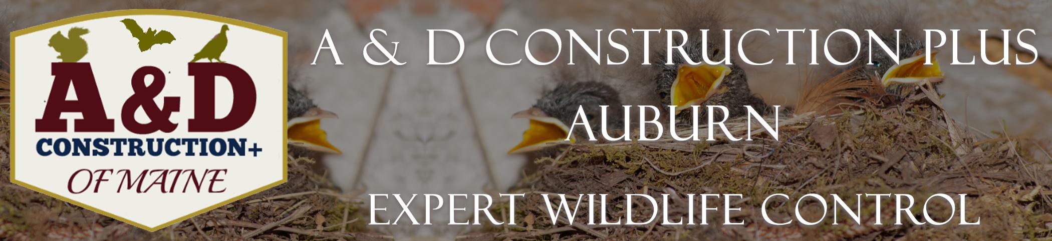 A AND D Construction PLUS Bat Removal Auburn Maine