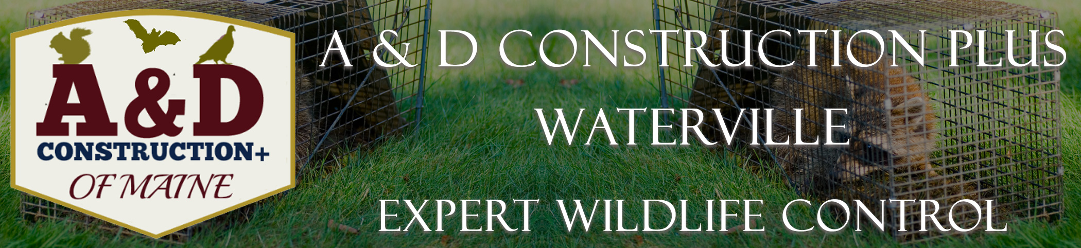 A AND D Construction PLUS Bat Removal Waterville Maine