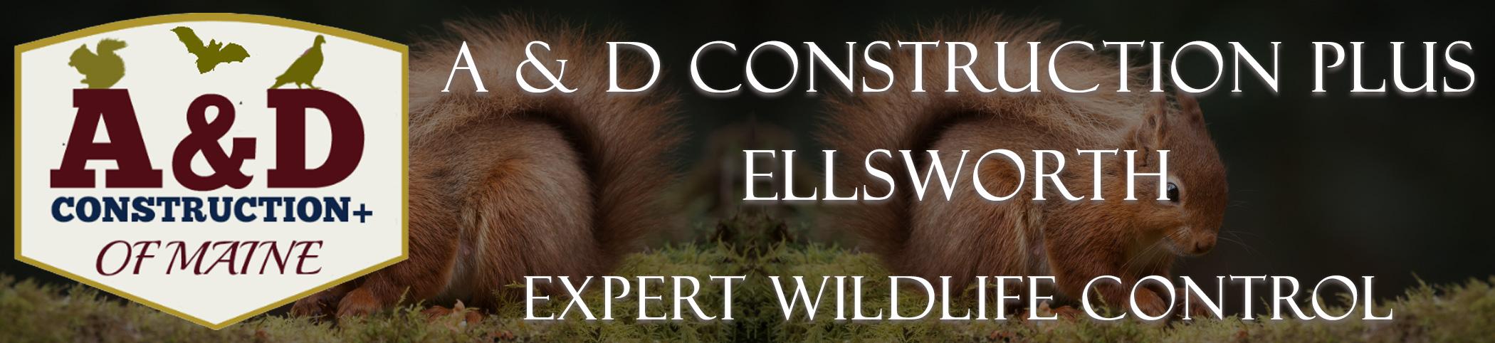 A and D Construction Plus Bat Removal Ellsworth Maine