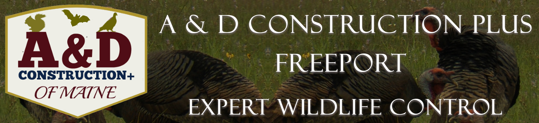 A AND D Construction PLUS Bat Removal Freeport Maine