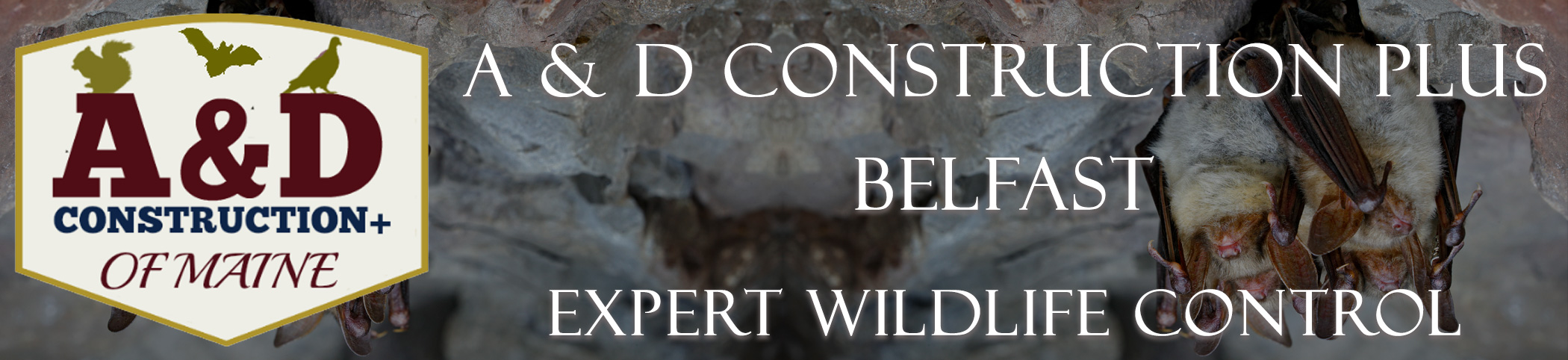 Belfast Maine Wildlife Removal Services