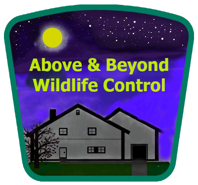 the villages florida bat removal company exclusion of