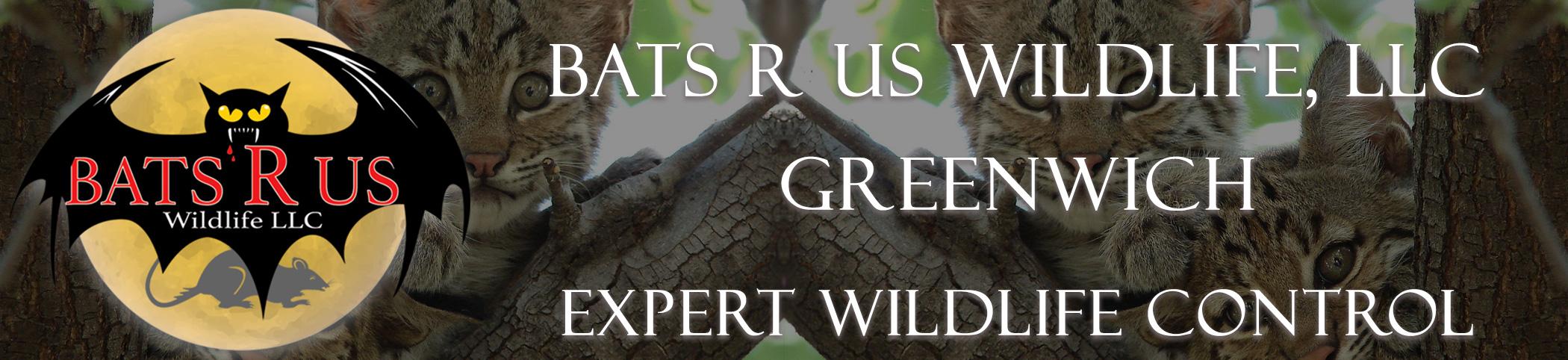 Bats R Us Wildlife LLC Greenwich Connecticut