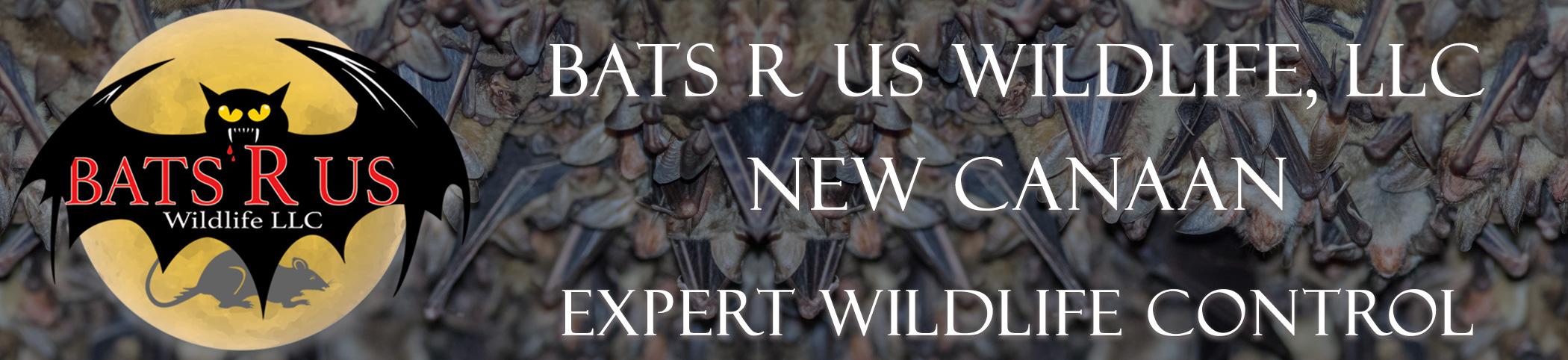 Bats R Us Wildlife LLC New Canaan Connecticut