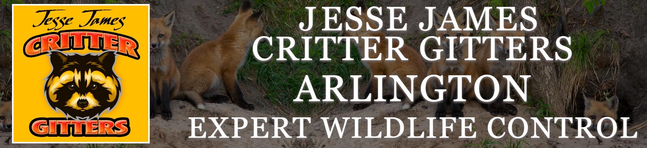 Critter_Gitters_header_ARLINGTON_VA