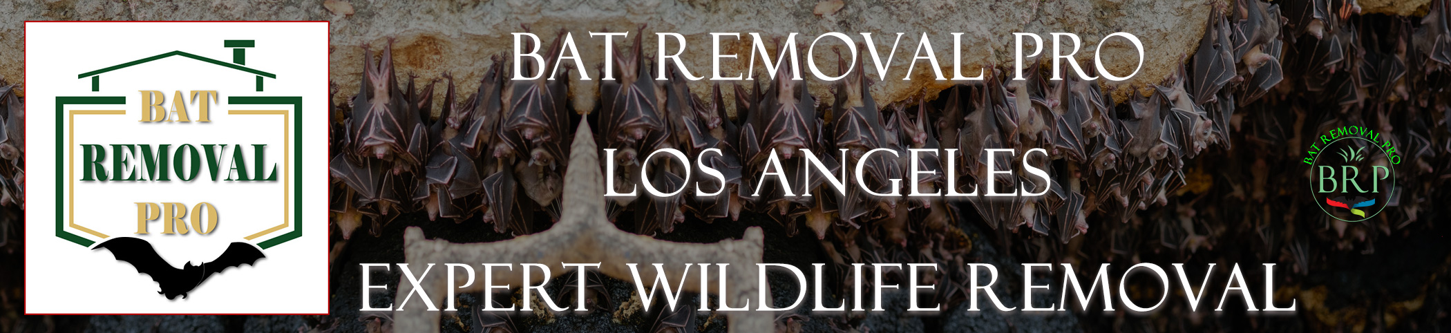 los angeles california bat removal at bat removal pro