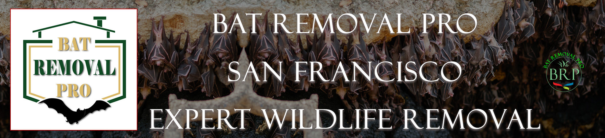 san francisco california bat removal at bat removal pro