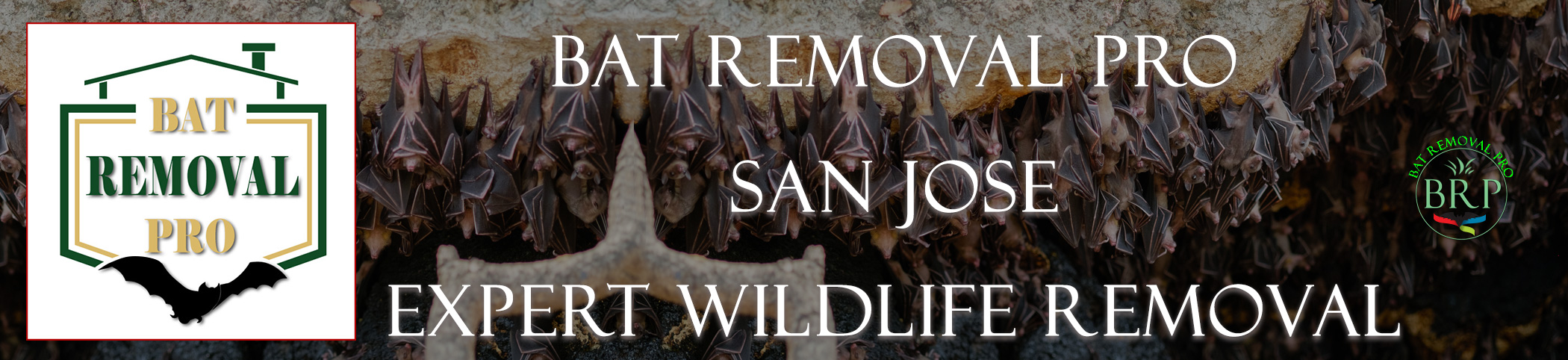 san jose california bat removal at bat removal pro
