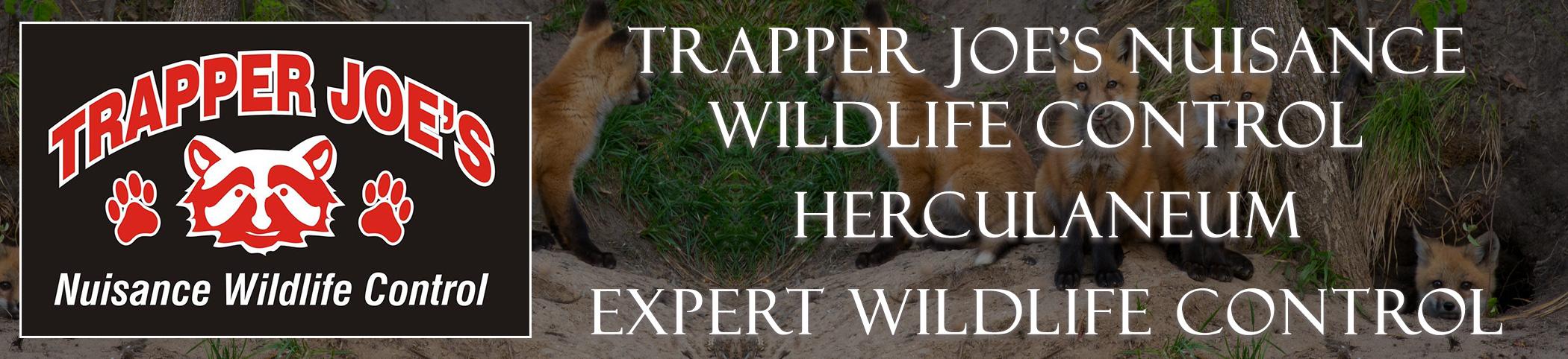Trapper Joes Herculaneum  Missouri header image