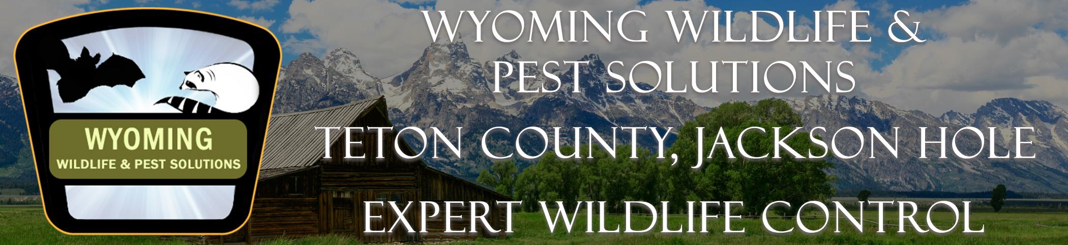 Wyoming Wildlife And Pest Solutions Teton County Jackson Hole headers