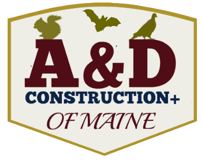 a and d construction bat removal maine